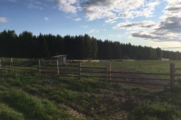Ордино (Ферма 2)